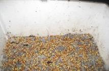 Hướng dẫn ươm hạt giống