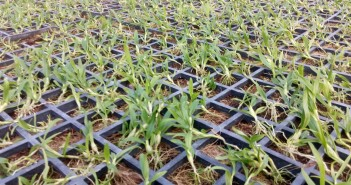 Những lưu ý khi trồng lan cấy mô
