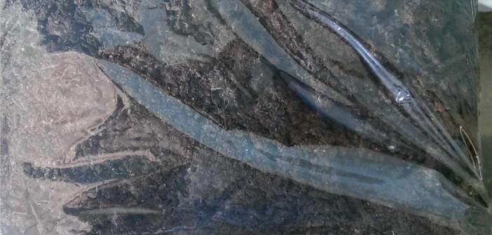 Phân trùn quế - Những điều cần biết