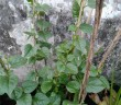Những lưu ý khi trồng rau sạch tại nhà