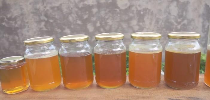 Phân biệt mật ong rừng - mật ong nuôi